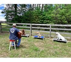 Best Dog agility training nashville tn.aspx