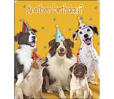 Best Dog barking happy birthday wav