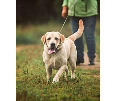 Best Dog behaviour training wollongong.aspx