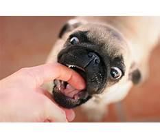 Best Dog bite puppy