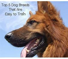 Best Dog breeds that train easy