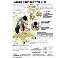 Best Dog cpr training