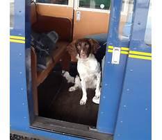 Best Dog day train