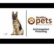 Best Dog door training instructions.aspx