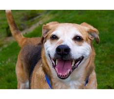 Best Dog house for two.aspx