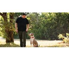 Best Dog obedience training dfw