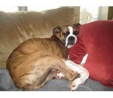 Best Dog obedience training dyersburg tn
