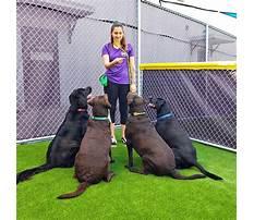 Best Dog obedience training kenosha wi.aspx