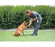 Best Dog obedience training seymour indiana.aspx
