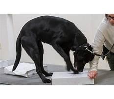 Best Dog scent training calgary.aspx