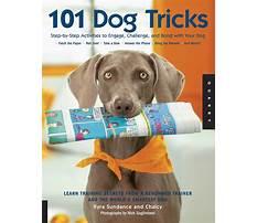 Best Dog train book