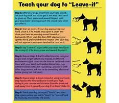Best Dog train drop it