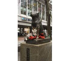 Best Dog train station every day