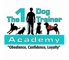 Best Dog training academy