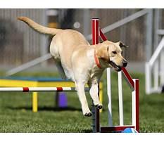 Best Dog training aurora oh.aspx