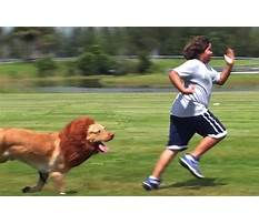 Best Dog training away from home