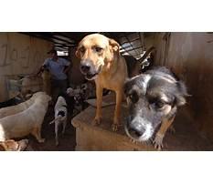 Best Dog training beirut lebanon.aspx
