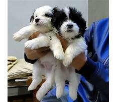 Best Dog training bhopal