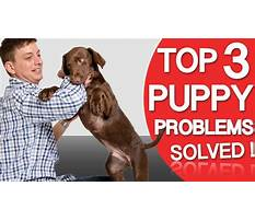 Best Dog training biting problems