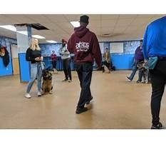 Best Dog training boston area.aspx