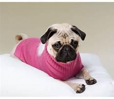 Best Dog training brainerd mn.aspx
