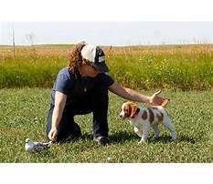 Best Dog training breaks.aspx