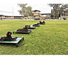 Best Dog training camp philadelphia