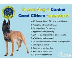 Best Dog training cgc test