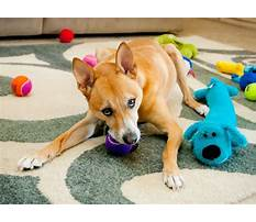 Best Dog training chewing