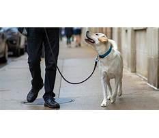 Best Dog training chicago