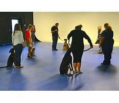 Best Dog training class