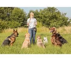 Best Dog training classes