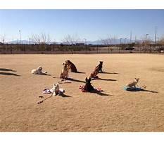 Best Dog training classes henderson nv
