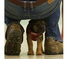 Best Dog training classes northampton