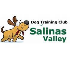Best Dog training club of salinas valley