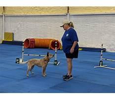 Best Dog training club of tampa