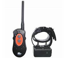 Best Dog training collars dt systems
