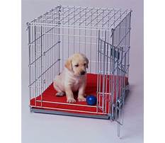 Best Dog training crate