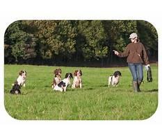 Best Dog training cwmbran