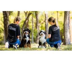 Best Dog training dfw