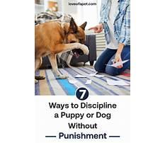 Best Dog training discipline