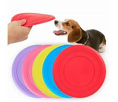 Best Dog training discs pets at home