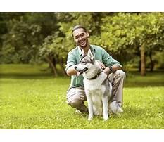 Best Dog training download videos