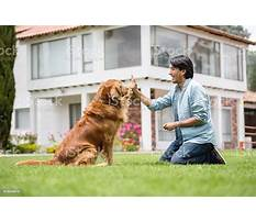 Best Dog training dvd download