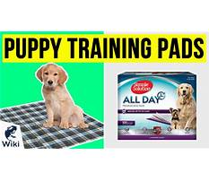 Best Dog training dvd reviews