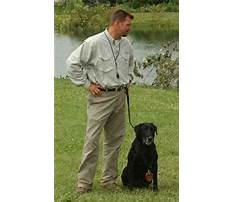 Best Dog training dyersburg tn