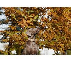 Best Dog training dyker heights