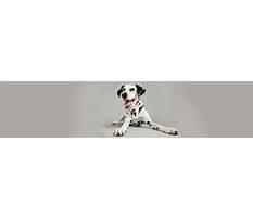 Best Dog training eagan mn.aspx