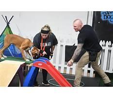 Best Dog training ebensburg pa