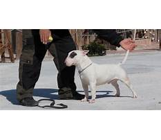 Best Dog training ebook in hindi